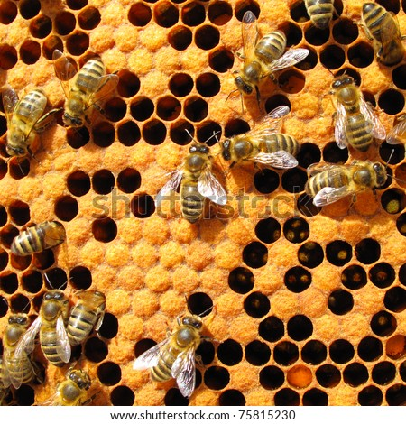 Bees working on honey cells in beehive. Close up macro. - stock photo