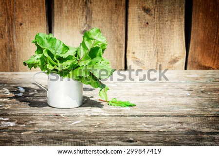 beet bunch of leaves in a retro cup. true village style . eco-friendly ingredients for vegan salad. Rural texture . there's space for an inscription - stock photo