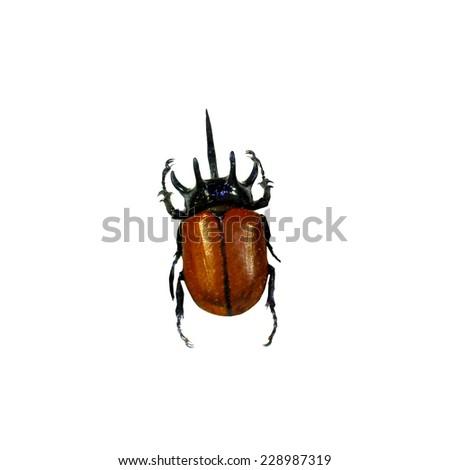 beetle isolated - stock photo