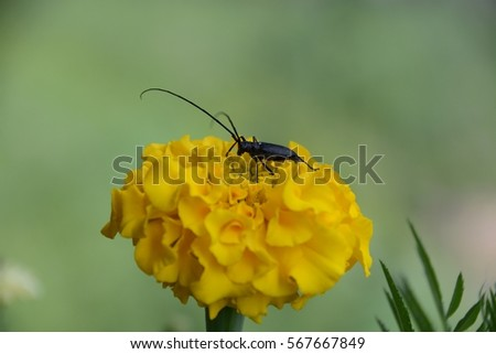 Beetle on a flower.