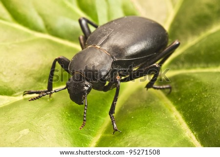 Beetle on a green leaf - stock photo
