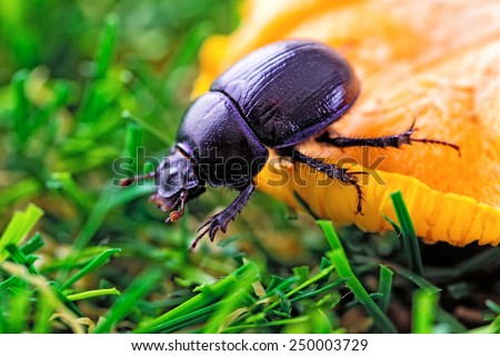 Beetle on a mushroom and green grass - stock photo