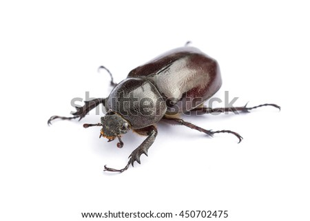 Beetle,Rhinoceros beetle, Rhino beetle, Hercules beetle, Unicorn beetle, Horn beetle (Dynastinae) - stock photo