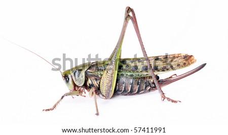 beetle studio shot - stock photo