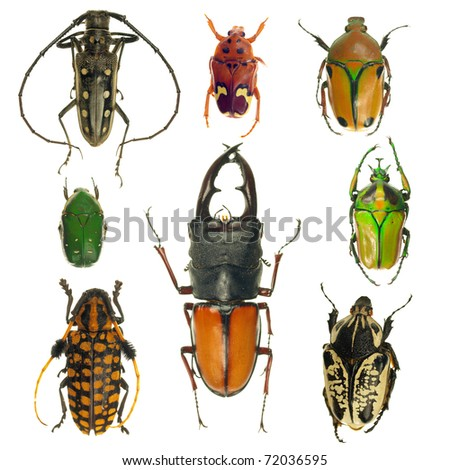 Beetles collection - stock photo