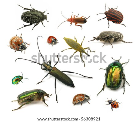 Beetles isolated on white - stock photo