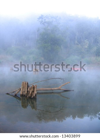 Before sunrise in rainforest - stock photo