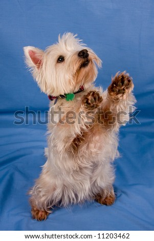 Begging - stock photo
