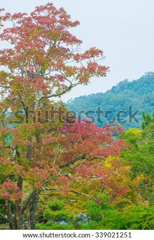 Begin autumn forest - stock photo