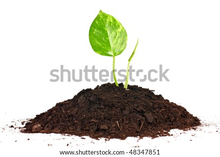 Beginning concept by small plant growth from soil.
