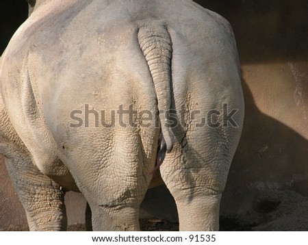 Behind of a rhinoceros - stock photo