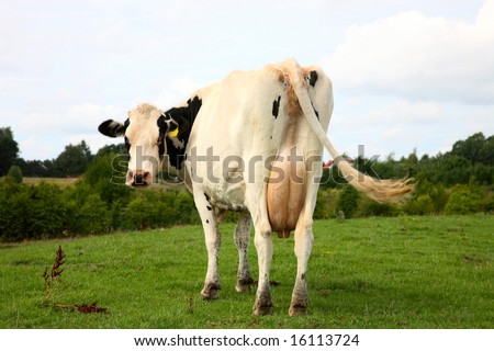 a look at the mad cows disease and mad man Read the passage from when birds get flu and cows go mad by john diconsiglio the human version of mad cow resembles a rare brain disease called variant cruetzfeldt-jakob disease (vcjd.