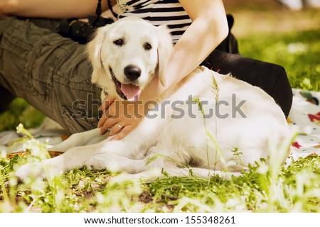 Beige Labrador lies near breeder on the green grass - stock photo