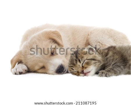 beige puppy and kitten
