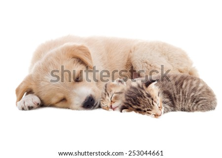 beige puppy and kittens sleeping - stock photo
