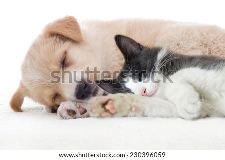 beige puppy sleeps - stock photo