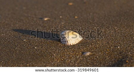 Beige shell and its shadow on the sand on the sea shore - stock photo