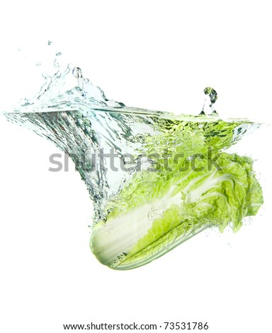 Beijing cabbage in water splash isolated on white