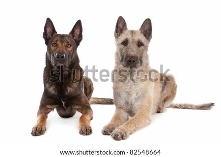 dog breeds for me dog breeds wiki protective dog breeds doodle dog ...