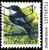 "BELGIUM - CIRCA 1992: a stamp printed in Belgium shows a bird, with the inscription ""Bergeronette grise"", from the series ""Birds"", circa, 1992 - stock photo"