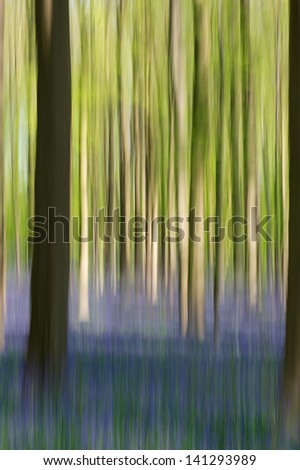 Belgium - Impression of woods covered with a blanket of wild bluebells at Hallerbos - stock photo