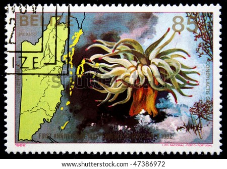 BELIZE - CIRCA 1982: A stamp printed in Belize shows Condylactis gigantea, circa 1982