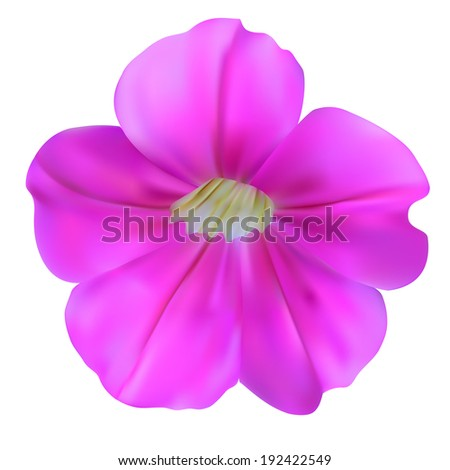 Bell flowers. Illustration. Isolated on white