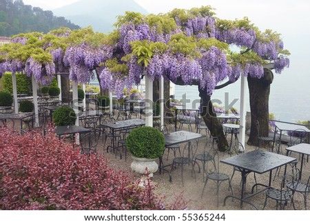 Bellagio Wisteria - stock photo