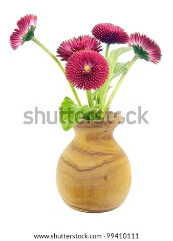 Bellis perennis - daisy flowers in wooden vase on a white background - stock photo