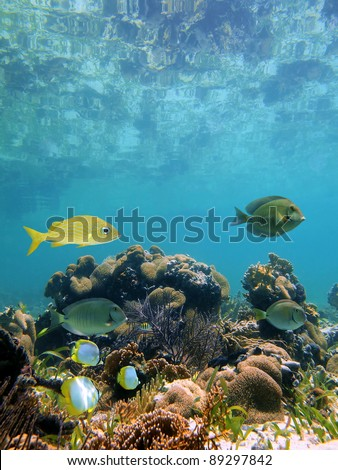 Below the mirror surface of a clear caribbean lagoon lies a thriving coral garden with tropical fish, Mayan Riviera, Mexico - stock photo
