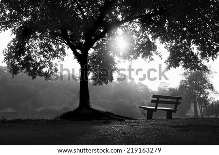 Bench and Tree Shadows In the morning light ( This image has a high noise impact because it will give a more in-depth on this picture ) - stock photo