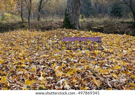 Bench covered in fallen maple leaves