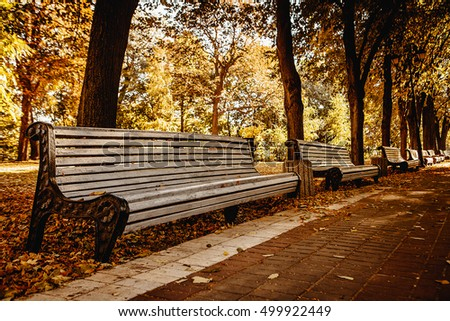 Bench in autumn park. Autumn landscape