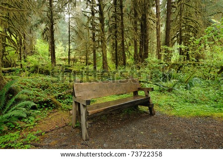 bench in hoh rain forest in olympic national park, washington, usa - stock photo