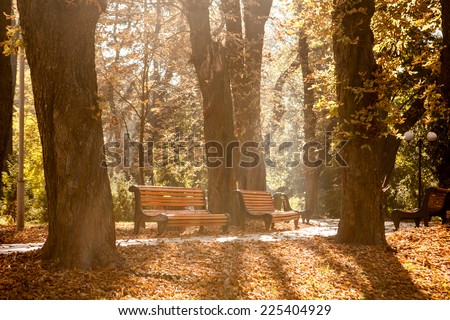 bench in the autumn park  - stock photo