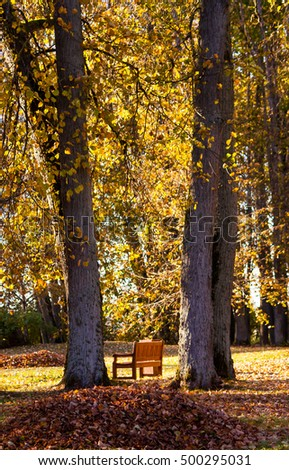 bench in the autumn park between two large trees, yellow foliage and fallen leaves on the ground, landscape Nature, natural, nature, one bench, a mountain collected leaves in the foreground,