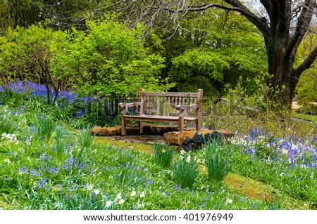 Bench in the garden. Wooden bench in a secluded spot of the garden surrounded with lush green foliage and spring flowers, bluebells and daffodils, - stock photo