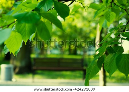 bench in the park blurred with focus on foreground frame of leafs. abstract nature background - stock photo