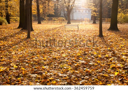 Bench on leaves in autumn park. Beautiful soft backlight