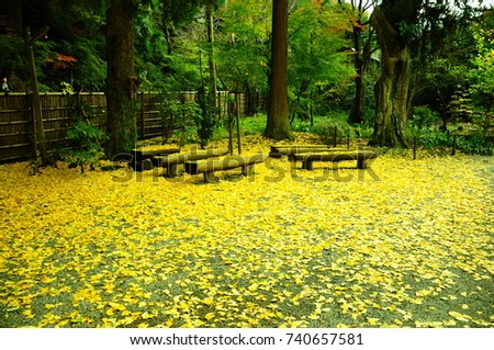 https://thumb7.shutterstock.com/display_pic_with_logo/167494286/740657581/stock-photo-bench-on-the-carpet-of-ginkgo-biloba-740657581.jpg
