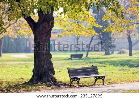 Bench under the tree in the Kalemegdan park, Belgrade Serbia - stock photo
