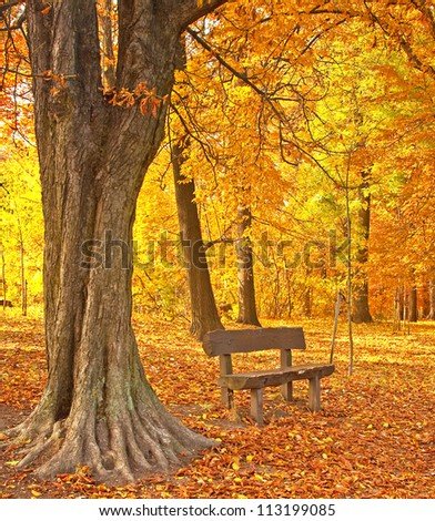 Bench with trees in autumn - stock photo