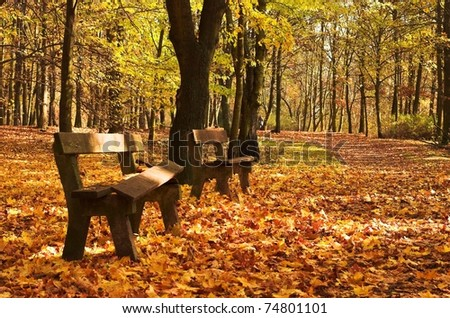 benches in a park - stock photo