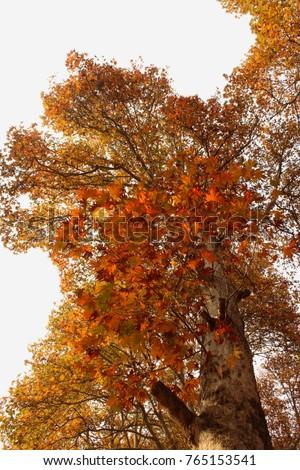 beneath chinar tree stock photo royalty free 765153541 shutterstock rh shutterstock com chinar 1 english guide pdf chinar 1 english guide