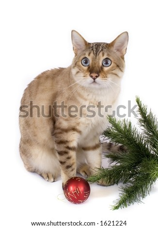 Bengal cat with christmas tree and bauble
