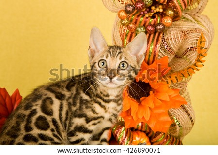 Bengal kitten sitting in front of Autumn Fall wreath decorated with silk flowers on yellow background  - stock photo