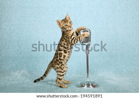 Bengal kitten standing on hind legs holding onto faux fake vintage microphone on stand against light blue background  - stock photo