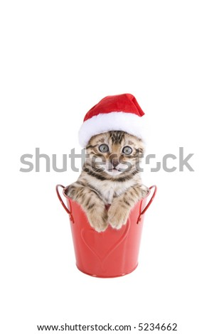 Bengal kitten with Christmas hat on isolated - stock photo