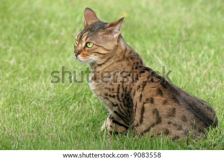 effective flea treatment for cats uk