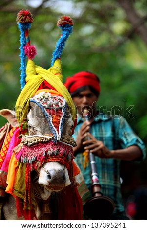 BENGALORE, INDIA - DEC 9: An unidentified boy along with his ox plays music to earn a living in Bangalore City, on  Dec 9 2011